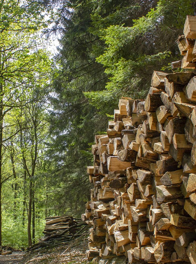 Holzscheite zu einem Haufen gestapelt