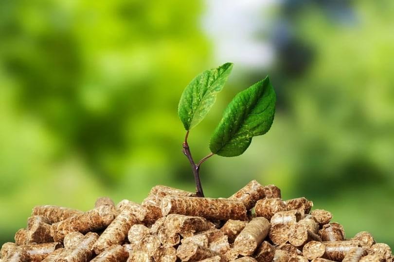 Nachhaltigkeit Pellets Pflanzen